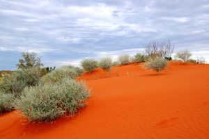 Visiting Australian Dry Land Can Be Sheer Fun With Best Desert Guide